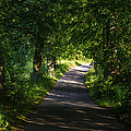 Summer Forest Road by Pati Photography