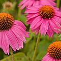 Summer Garden by Lindley Johnson