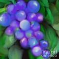 Summer Grape by Christine Fournier