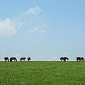 Summer Grazing by Roger Potts