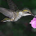 Summer Hummer by Theo OConnor