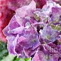 Summer Hydrangeas With Painted Effect by Debbie Portwood