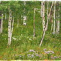 Summer In The Colorado Mountains by Priscilla Burgers