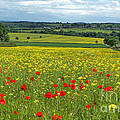 Summer In The Countryside by David Birchall