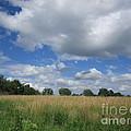 Summer Iowa Prairie by Carrie Ries
