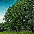 Summer Landscape by Heike Hultsch