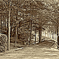 Summer Lane Sepia by Steve Harrington