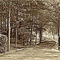 Summer Lane Sepia by Steve Harrington