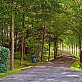 Summer Lane by Steve Harrington