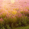 Summer Light by Kunal Mehra