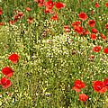 Summer Meadow Background by Jaroslav Frank