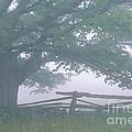 Summer Morning Fog by Alan L Graham