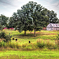 Summer On The Farm by Larry Braun