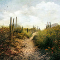 Summer Pathway by John Rivera