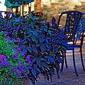 Summer Patio by Rowana Ray