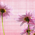Summer Pinks by Susie Peek