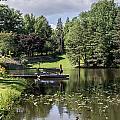 Summer Pond by Diana Weir