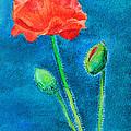 Summer Poppy by Masha Batkova