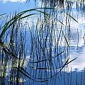 Summer Reflection by Susan Copley