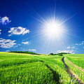 Summer Rural Landcape by Michal Bednarek