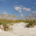 Summer Sea Oats by Maria  Struss