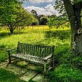 Summer Shade by Adrian Evans