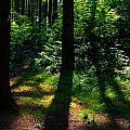 Summer Shade by Jeanette C Landstrom