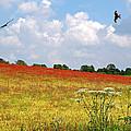 Summer Spectacular - Red Kites Over Poppy Fields by Gill Billington