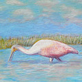Summer Spoonbill by Patty Weeks