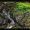 Summer Stream Waterfall by John Stephens