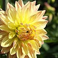 Summer Sun by Christiane Schulze Art And Photography