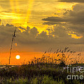 Summer Sun by Marvin Spates