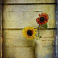 Summer Sunflowers by Sari Sauls