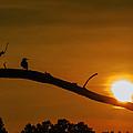 Summer Sunset  by John  Hannan