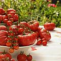 Summer Tomatoes by K Powers Photography
