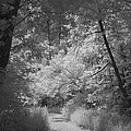 Summer Trail by HW Kateley