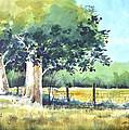 Summer Trees by Rick Mock