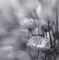 Summer Whispers Iv by Priska Wettstein