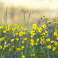 Summer Wildflowers On The Rim  by Saija  Lehtonen