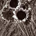 Summer's End Xxvi by Tina Baxter