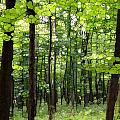 Summer's Green Forest Abstract by Dan Sproul