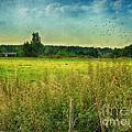 Summertime by Jutta Maria Pusl