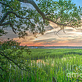 Summertime Sunset by Dale Powell
