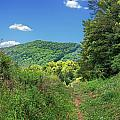 Summertime Trail At The Gap by Mary Almond
