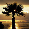 Sun And Palm And Sea by Joe Schofield