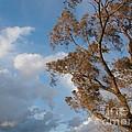 Sun And Wind by Ann Horn