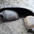 Sun Basking Turtles by Linda Kerkau