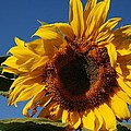 Sun Blessed by Eric Tressler