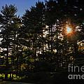 Sun Burst Through The Trees by Thomas Woolworth