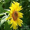 Sun Dancer  by Neal Eslinger